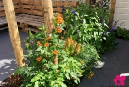 Mediteraanse-planten