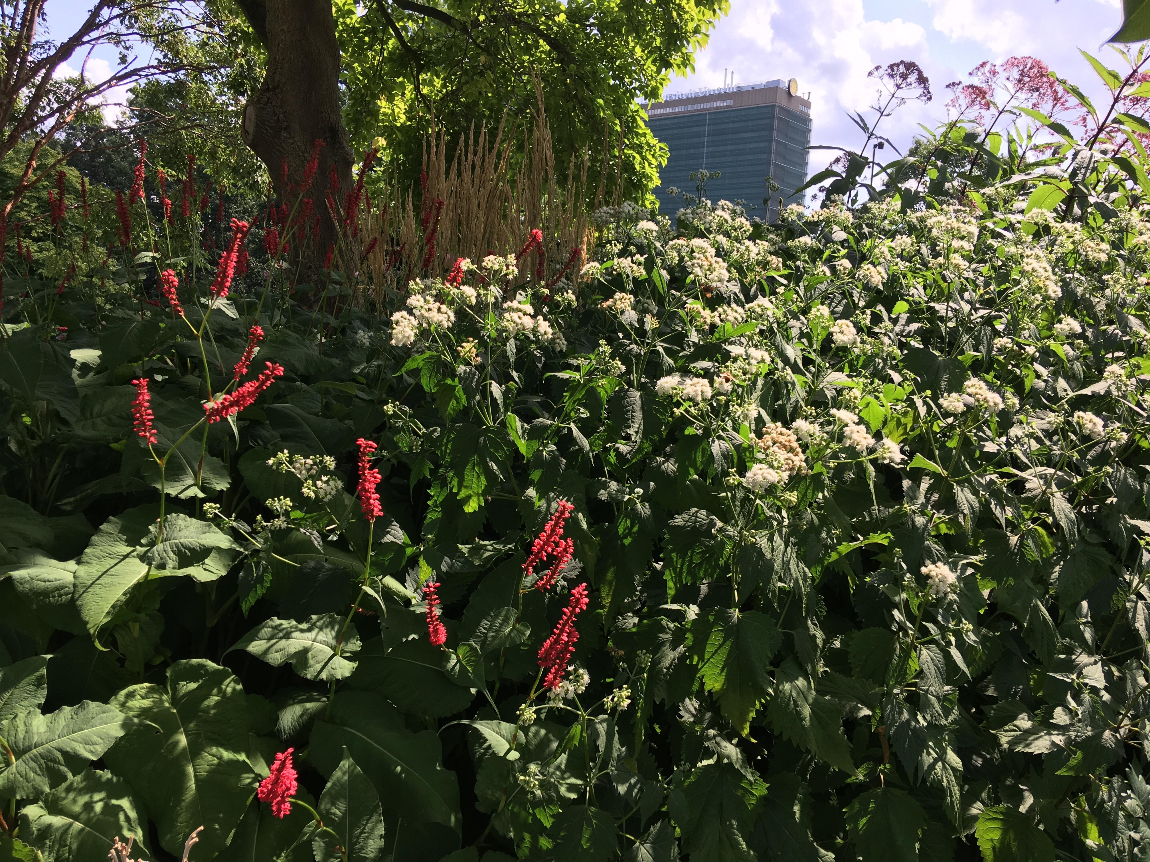 Piet Oudolf Botanische Tuin Utrecht